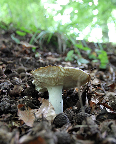 и снова грибочек