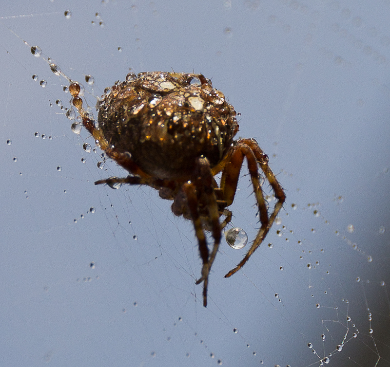 недовольный паук