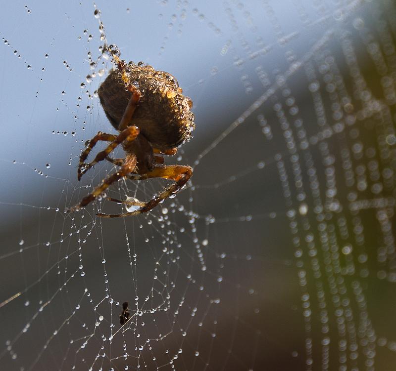 хозяин второй паутины