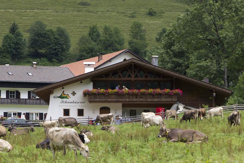 и снова домик и коровы