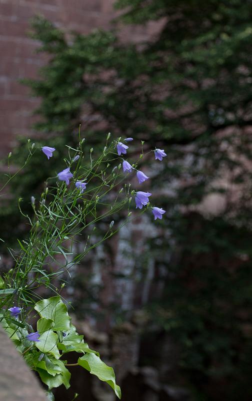 цветоооочки