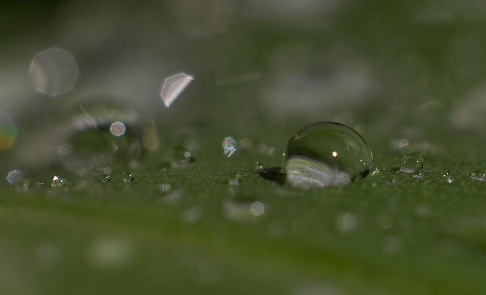 Бутонов круглые бубенчики © Татьяна Гладченко, 2014
