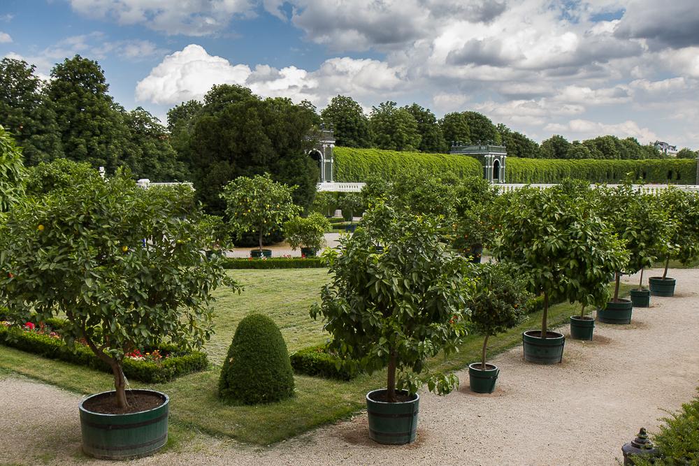 Дворец Шёнбрунн (Schloß Schönbrunn) - Цитрусовый сад ©Татьяна Гладченко, 2014