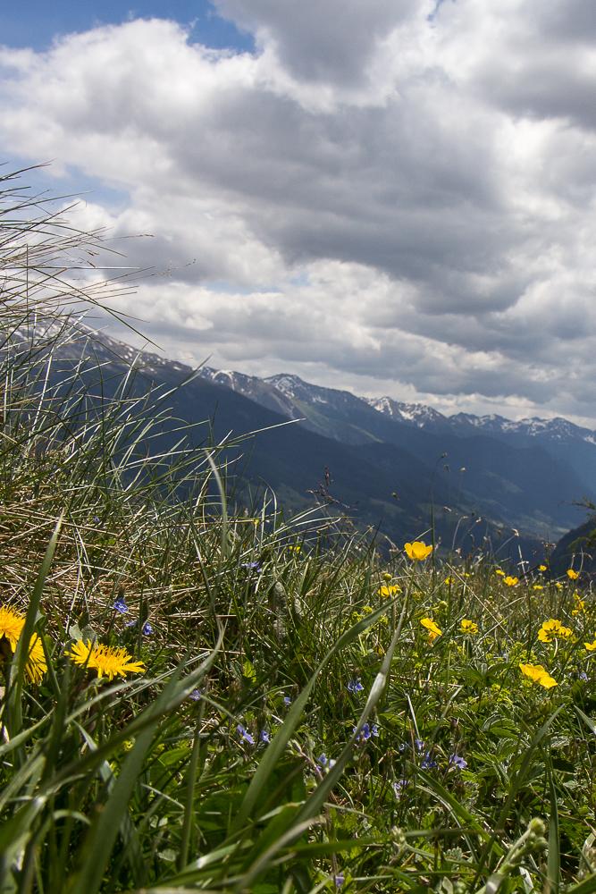 Альпийский луг ©Татьяна Гладченко, 2014