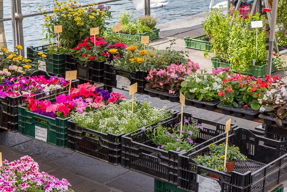 Букет одинцово, заказ рассады цветов