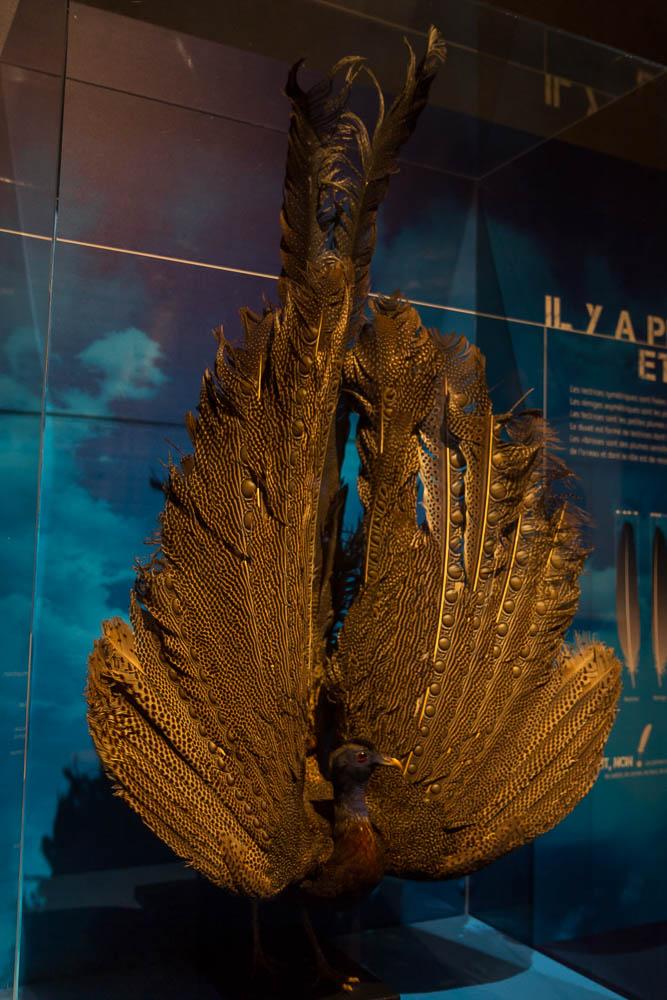 Музей в замке Анси (Annecy), Франция © Татьяна Гладченко, 2014