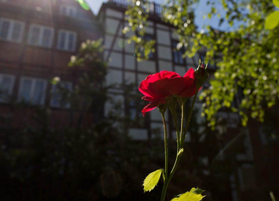 Отпуск 2015. Подорожное. Кведлинбург и Лимбург-на-Лане ©Татьяна Гладченко, 2015