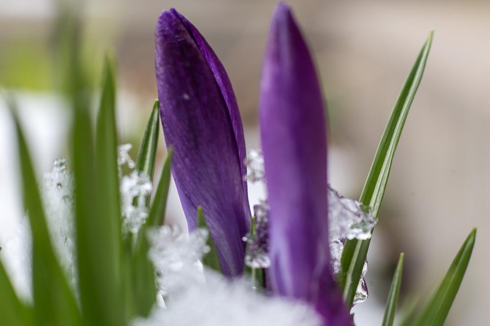 И всё-таки весна... ©Татьяна Гладченко, 2016
