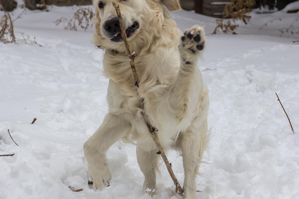 Snow dog © Tatiana Gladchenko