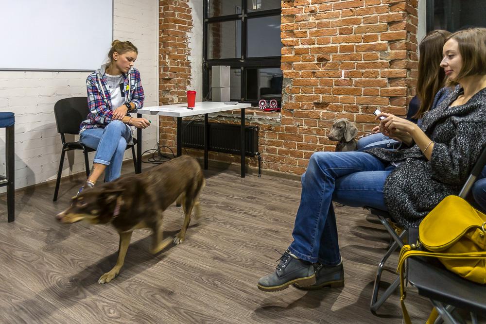 WoW-Dog-Family_meeting © Tatiana Gladchenko
