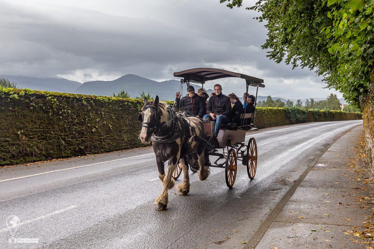 Killarney 2019 © Tatiana Gladchenko